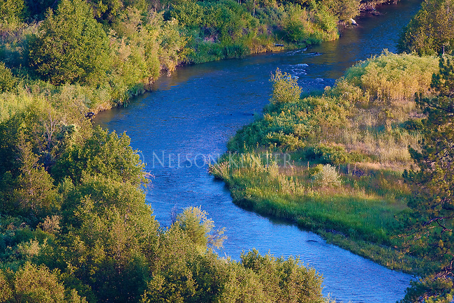 Blue waters of a stream running through a brushy green shore line