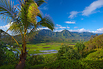 Kauai, HI<br /> Palm tree frames the view of Hanalei Valley taro fields and central mountains in morning sun, Hanalei National Wildlife Refuge