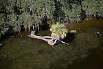 East bank of the St. Johns River, just south of Georgetown, Florida - helicopter aerial