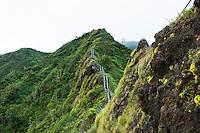 "Steps leading upward into the Ko'olau mountains on the Haiku Stairs (""Stairway to Heaven"") hiking trail in Kaneohe, Oahu"