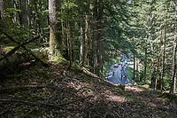 breakaway group through the forest<br /> <br /> stage 7: Aoste &gt; Alpe d'Huez (168km)<br /> 69th Crit&eacute;rium du Dauphin&eacute; 2017