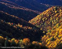 Autumn colors along Deep Creek Valley, Great Smoky Mountains National Park, North Carolina
