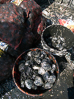 Quahogs raked up in Narragansett Bay off Rhode Island. Rhode Island's official state shell, the quahog, is formally known as the northern hard-shell clam.