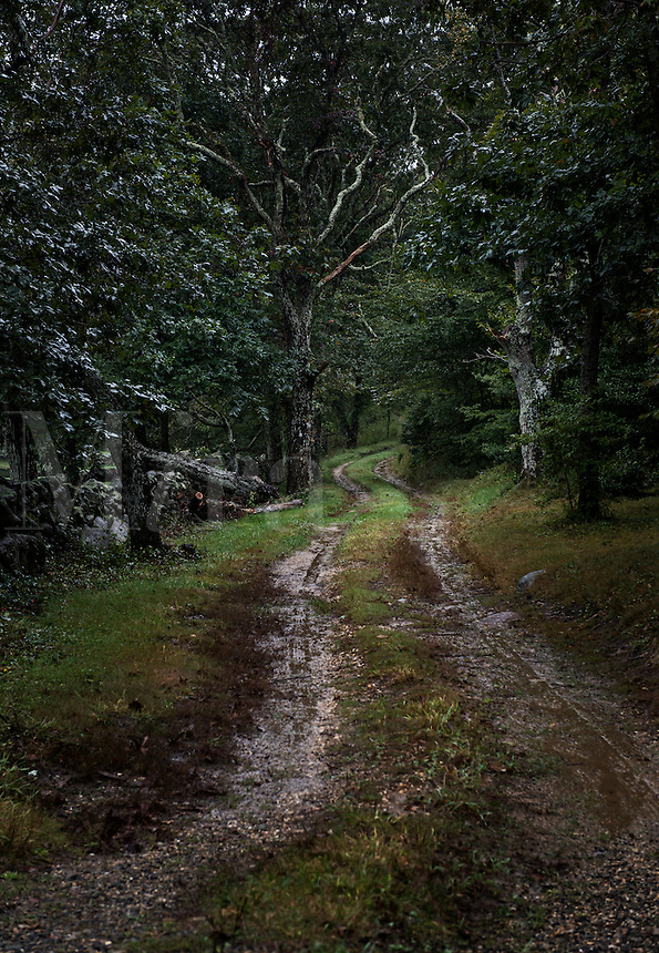 Dreary dirt road.