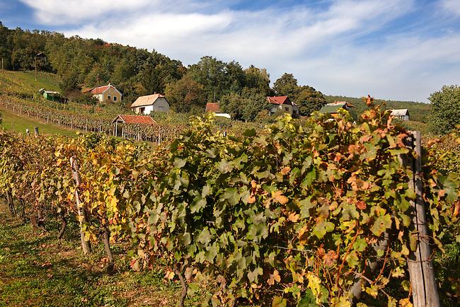 Korseg (Körseg) vineyards, Velem, Hungary