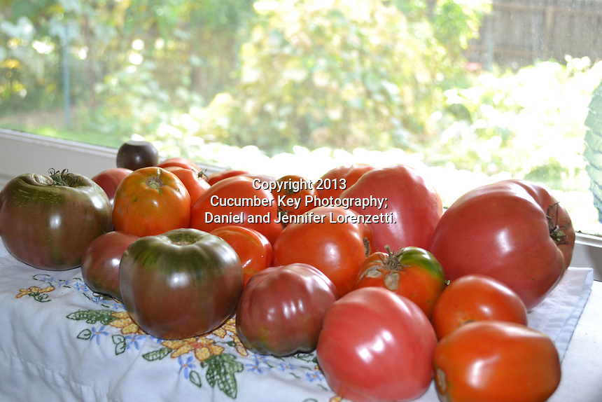 Tomatoes ripening on an Ohio windowsill, featuring such heirloom varieties as Black Krim, Amish Paste, and Ox Heart.