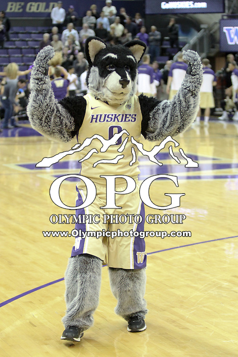 March 03, 2014:  Washington mascot Harry was on hand during the game against UCLA.  UCLA defeated Washington 91-82 at Alaska Airlines Arena in Seattle, Washington.