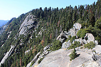 Stock photo: Pine trees and rocks of the mountains in the Sequoia national park as seen from the Moro Rock.