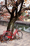 Red womens city bicycle parked at a cherry tree by a river in autumn on a street of Kyoto, Japan 2017.