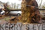 Cars lie under fallen trees at the Abbeyfeale VEC centre.