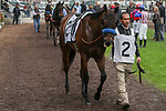 CERRITOS, CA  DECEMBER 07:  #2 Bast, ridden by Drayden Van Dyke, in the paddock beforeThe Starlet (Grade 1) on December 7, 2019, at Los Alamitos Race Course in Cerritos, CA..  (Photo by Casey Phillips/Eclipse Sportswire/CSM)