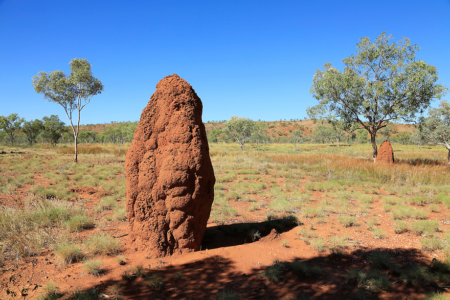 Termite Mound. The Kimberly Region. Western Australia.