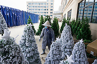 November 28, 2015, Yiwu China - A masked worker walks amongst Christmas trees sprayed with artificial snow outisde the Sinte An Christmas tree factory. The factor produces a variety of artificial trees for global export throughout the year.Photo by Dave Tacon / Sinopix