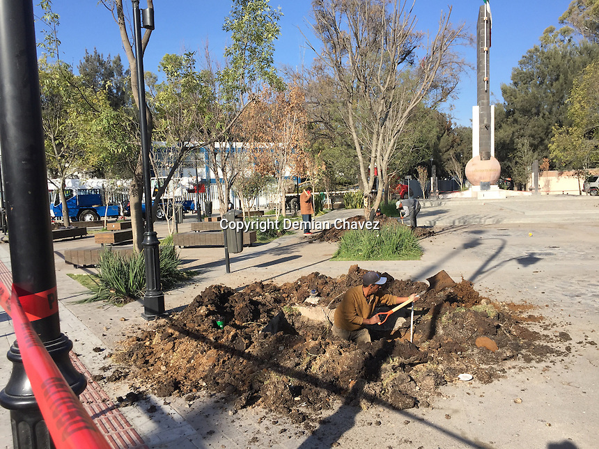 Querétaro, Qro. 26 de noviembre de 2016.- Arboles son plantados en la plaza del estudiante luego de que este lugar fuera remozado y presuntamente entregado como terminado. Al paso de tres semanas más de 12 árboles se habrían secado. Este fin de semana fueron plantado unos nuevos.