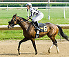 Encaustic winning The Joe French Memorial Stakes at Delaware Park on 5/29/10