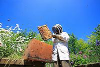 Jean Paucton in the Parc de la Villette, the bees fly about all over the place...Paris's Bees37/.