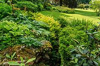 France, Sarthe (72), Le Lude, château et jardins du Lude, escalier de pierre et fougères autruche (Matteuccia struthiopteris), Rheum, Rodgersia...