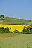 Weinbergsturm in den Weinbergen von Vendersheim, im Vordergrund ein gelb blühendes Rapsfeld