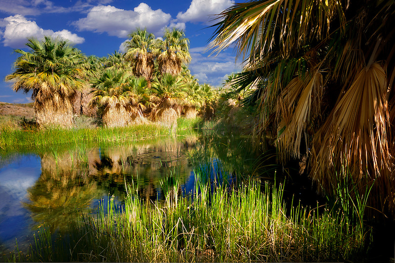 McCallum Pond. Coachella Valley Preserve. California