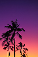 Stately coconut palms are silhouetted against a magnificent pink, purple and yellow pastel sunset.