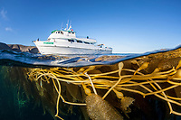 A dive boat is anchored near a kelp forest in the Channel Islands of California, USA, Pacific Ocean