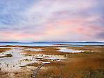 A Marsh Left Behind By The Receding Waters Of Lake Michigan, Traverse Bay, Michigan, USA
