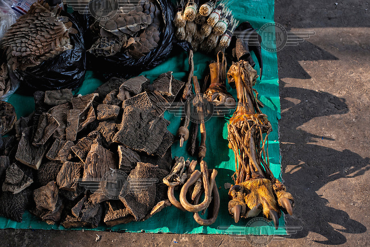 Elephant skin, tiger paws, tiger penis, and pangolin scales on sale in the market of Mong La. <br /> The town of Mong La on the Burma - China border in western Burma (Myanmar) is technically in Burma but relies on most infrastructure - electricity, telecommunications - on neighbouring China. The main currency used here is the Chinese yuan. The town is in the middle of the so-called &quot;Golden Triangle&quot; and specialises in gambling and the sale of poached and endangered species. Tiger skins, rhino horns, pangolins and other creatures are freely traded here and many are available to eat. Prostitution is rife and just outside the town a bear farm keeps between 500 and 600 bears which are kept in captivity for their bile which is harvested for medicinal use.
