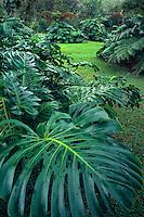 Arboretum<br /> Kalopa State Recreation Area<br /> Hamakua Coast<br /> Island of Hawaii,  Hawaii