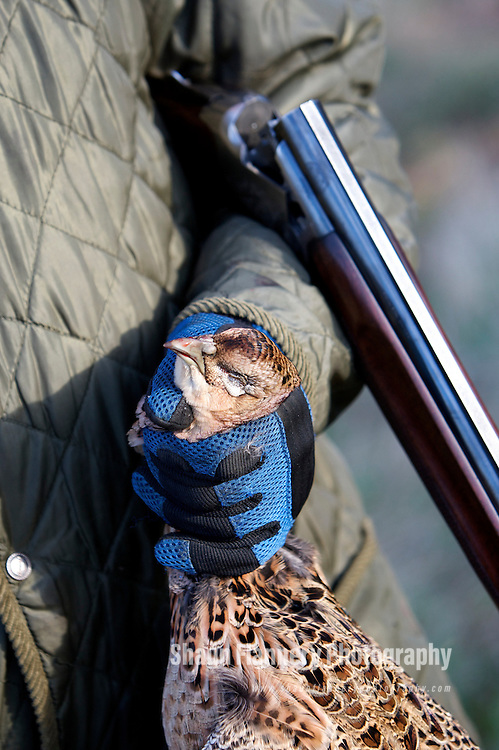 Pix: Shaun Flannery/sf-pictures.com..COPYRIGHT PICTURE>>SHAUN FLANNERY>01302-570814>>07778315553>>..19th December 2008...............Loversall 'game shoot' in Doncaster, South Yorkshire..A gun holds a shot Pheasant.