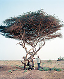 ERITREA, Asmara, a man standing in the desert under an Acacia tree on the outskirts of Asmara