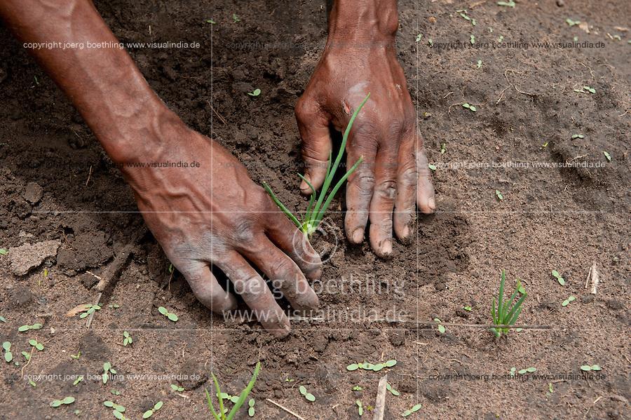 ANGOLA Kwanza Sul, farmer with onion plants / laendliches Entwicklungsprojekt ACM-KS, Dorf Sao Pedro, Farmer Virgilio Nguli 56 wurde von ACM im Gemueseanbau beraten, um zusaetzliches Einkommen zu erzielen, Feld mit Zwiebeln