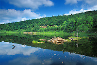 beaver house and pond reflection<br /> Gatineau Park<br /> Quebec<br /> Canada