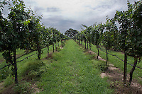 Texas Hill County Wine Vineyards and Wineries - Stock Photo, Image Gallery