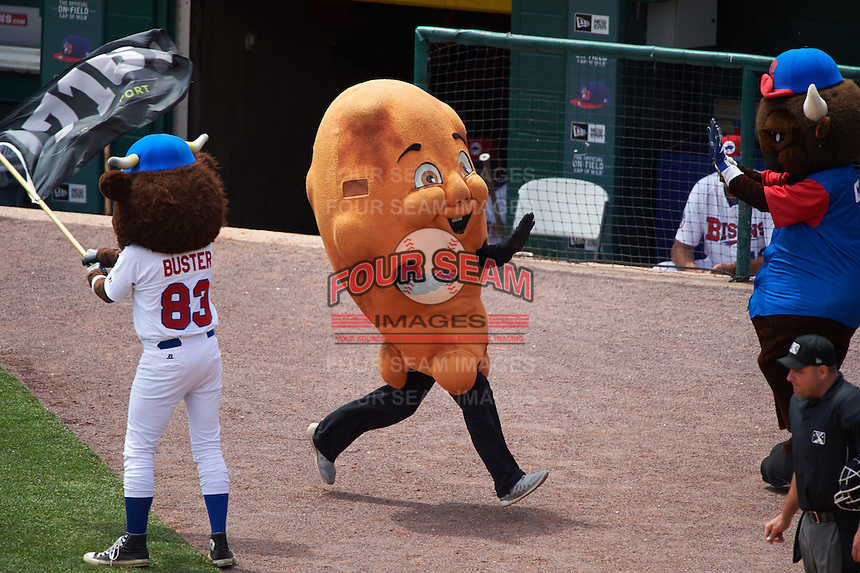Buffalo Bisons wing mascot wins the on field race as Buster T. Bison waves the flag during a game against the Louisville Bats on June 23, 2016 at Coca-Cola Field in Buffalo, New York.  Buffalo defeated Louisville 9-6.  (Mike Janes/Four Seam Images)