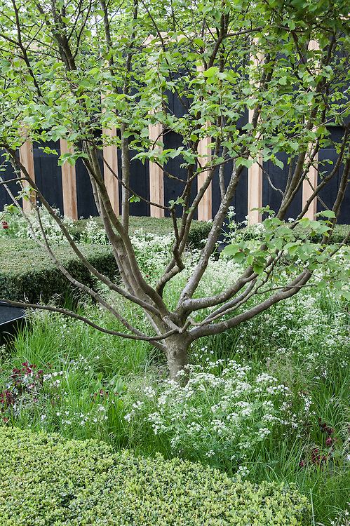The Telegraph Garden,  designed by Christopher Bradley-Hole, Gold medal winner, RHS Chelsea Flower Show 2013.