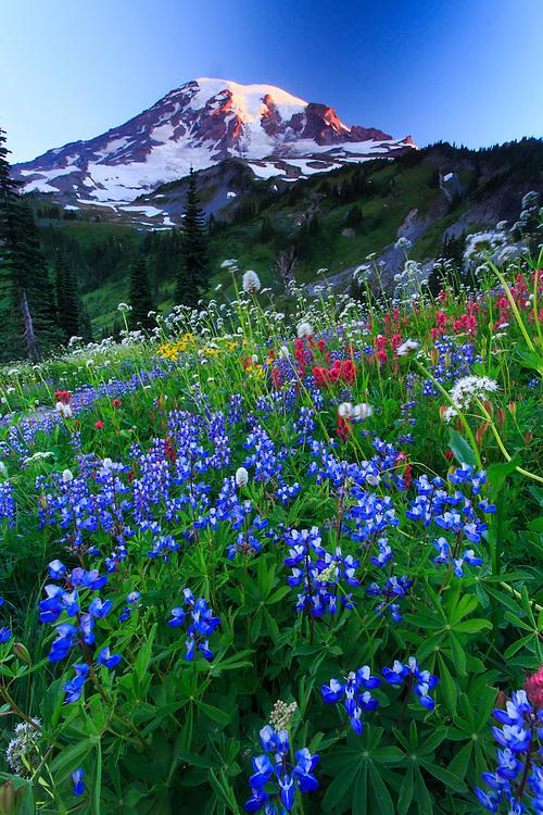 Wild flowers at Mt.Rainier National Park