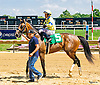 Tactical Hero winning at Delaware Park on 6/28/16