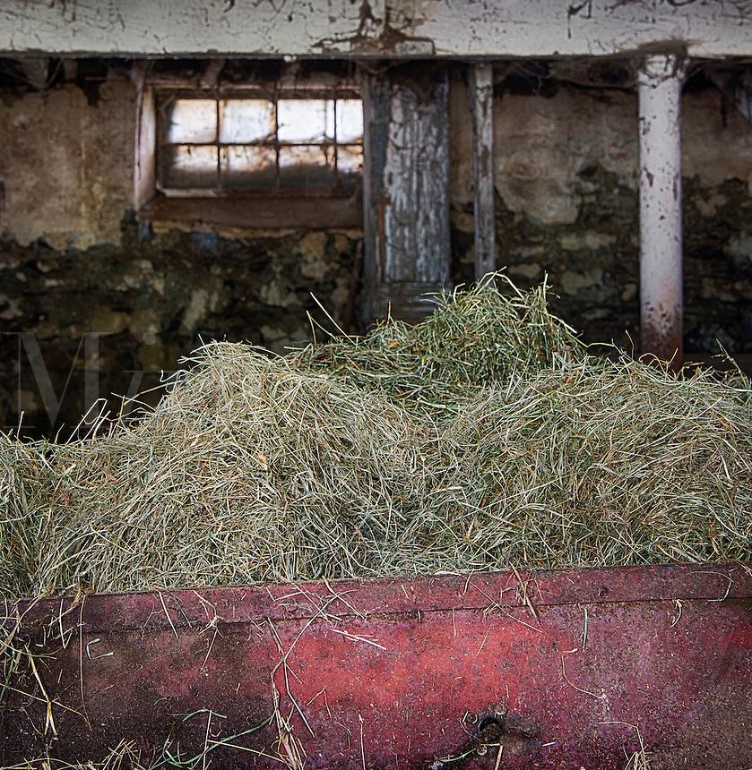 Hay in a barn bin to feed livestock.