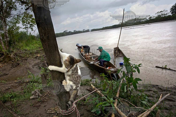 A cat climbs a post while fishermen prepare their lunch on a branch of the Magdalena River.