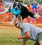 "Photo by Phil Grout..""Rain"" comes flying over Blake Kilbourne to snag the frisbee during competition at the annual Dog Fest at the State Fairgrounds in Timonium.presented by the Baltimore Humane Society."