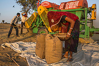 Guar farmers Birbal Ram, 38, his wife Kelavati Devi, 38, and their extended family thresh their harvested guar in their shared field in Rajera village, Bikaner, Rajasthan, India on October 23, 2016. Non-profit organisation Technoserve works with farmers in Bikaner, providing technical support and training, causing increased yield from implementation of good agricultural practices as well as a switch to using better grains better suited to the given climate. Photograph by Suzanne Lee for Technoserve