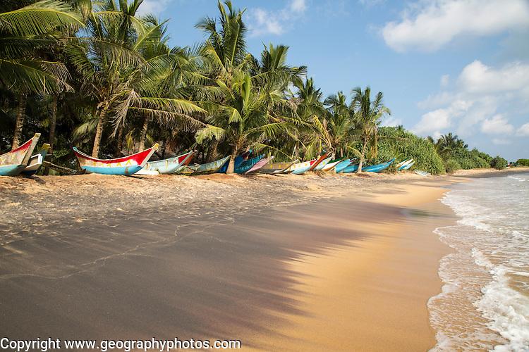 Brightly coloured fishing canoes under coconut palm trees of tropical sandy beach, Mirissa, Sri Lanka
