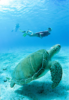 Julie Mozieka snorkeling with a large Green Sea Turtle<br />