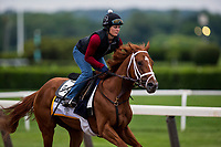 ELMONT, NY - JUNE 07: Vino Rosso completes preparations for the 150th Belmont Stakes at Belmont Park on June 07, 2018 in Elmont, New York. (Photo by Alex Evers/Eclipse Sportswire/Getty Images)