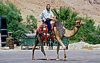 Transporte em camelo. Israel. 1995. Foto de João Caldas.