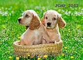 Marek, ANIMALS, REALISTISCHE TIERE, ANIMALES REALISTICOS, dogs, photos+++++,PLMP3163,#a#, EVERYDAY