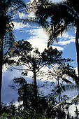Amazon, Brazil. Rainforest trees with a blue sky with white clouds.