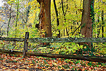 Colorful Fall Foliage And An Old Wooden Fence On A Rainy Day In Autumn At The Park, Sharon Woods, Southwestern Ohio, USA