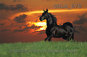Bob, ANIMALS, collage, horses, photos(GBLA678,#A#) Pferde, caballos