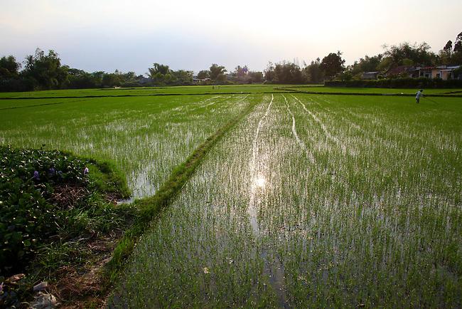 Rice paddies near Quy Nhon, Vietnam. April 25, 2016.